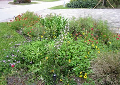 Native-Wildflower-Gardens