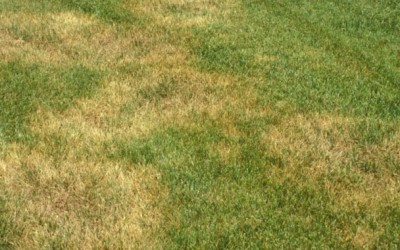 How to Avoid Lawn Fungus During Fall, Winter and Spring